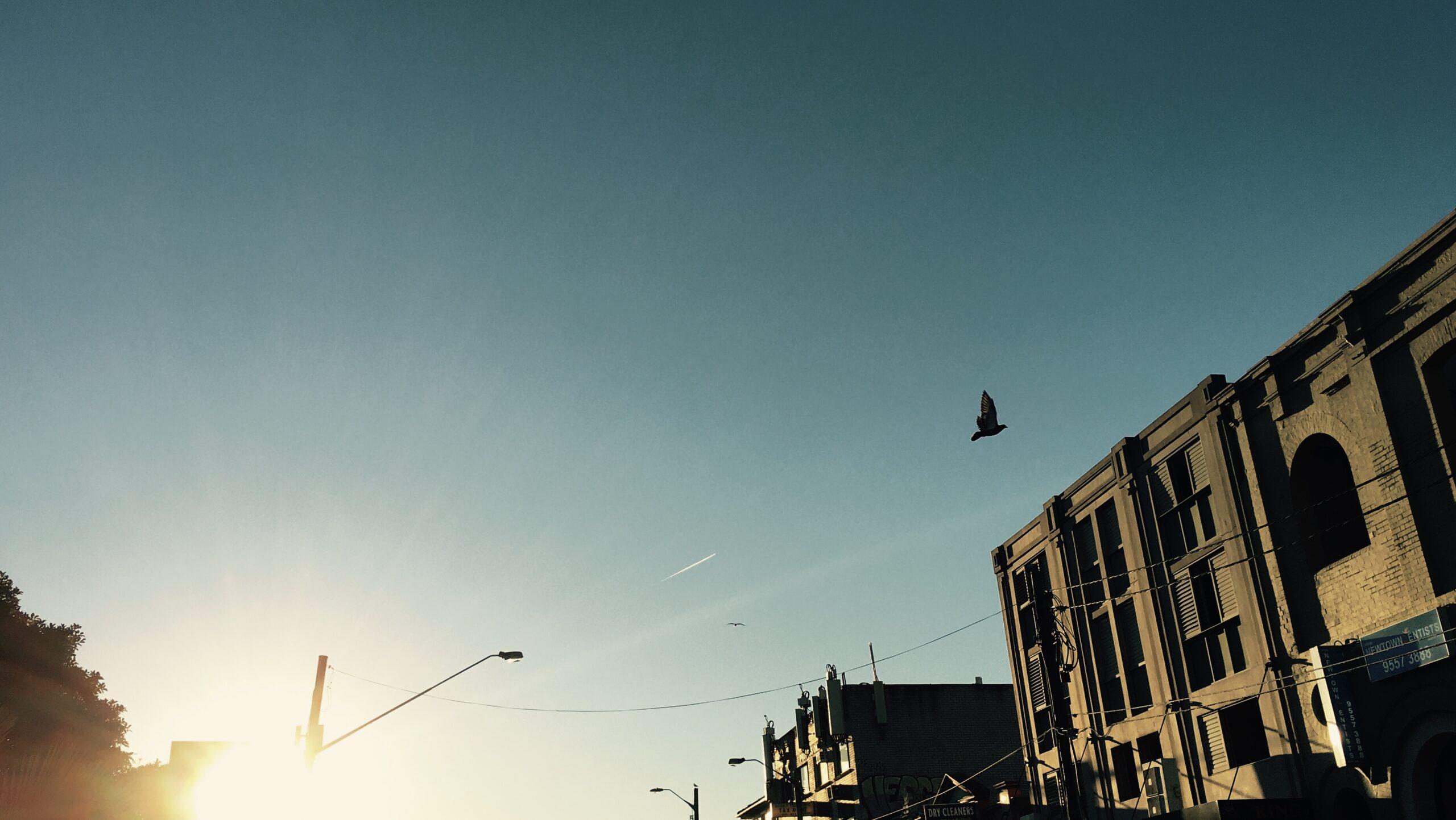 Sunrise, bird, building, shadow